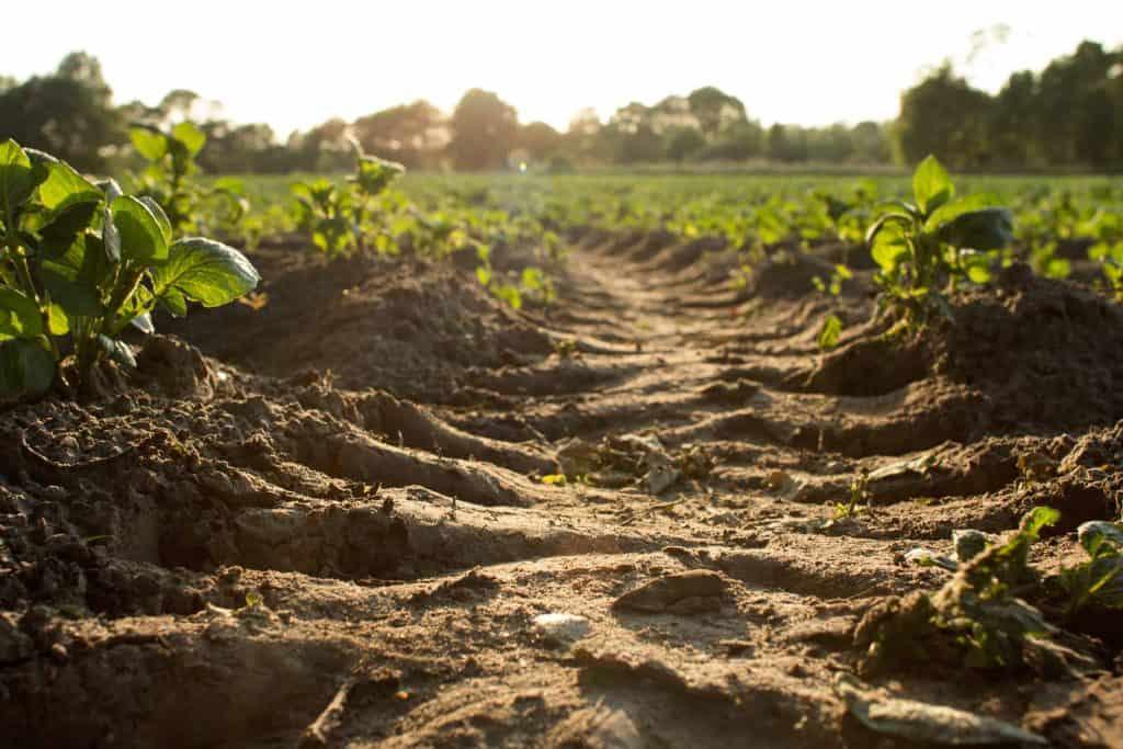 Pela Terra Farmland